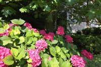 tattile-garden
